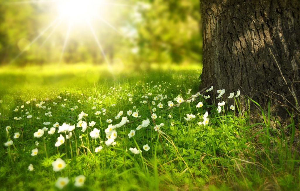 wiosna-1024x651 Podsumowanie marca