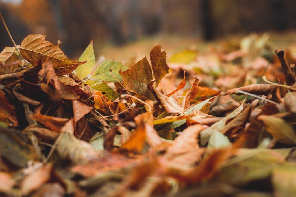 listopad-1024x682 Podsumowanie listopada