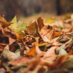 Podsumowanie listopada